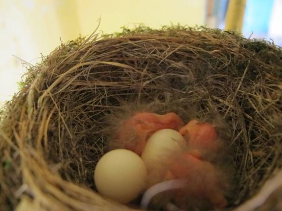 inside-nest