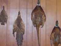 bird-pelts
