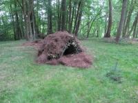 pine-needle-debris-hut