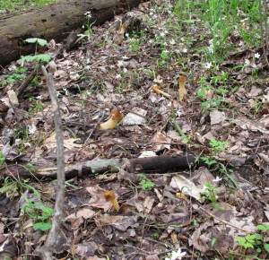 Morel Stand - Look Closely