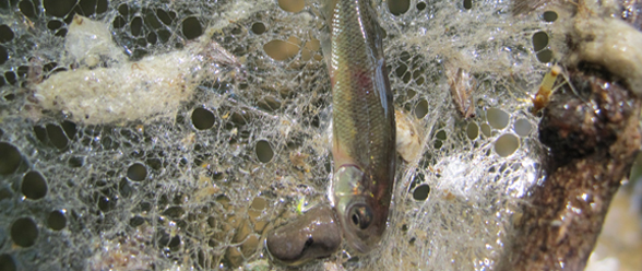 Survival Spider Web Fish Net Bio Prepper