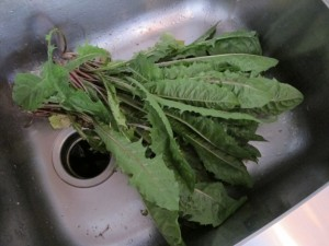 Dandelion Greens For Another Day