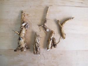 Dandelion Root - Washed & Trimmed