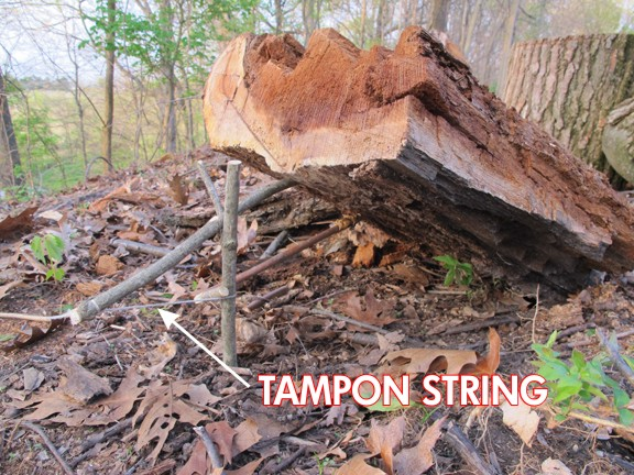 a snare in the forest made from a stick propping up a log. The stick is tied around with a string, and its labeled TAMPON STRING