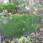 Natural Navigation: The Truth About Moss by Tristan Gooley