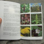 Creek's Top 2 Wild Edible Plant Reference Books: Thoughts & Review