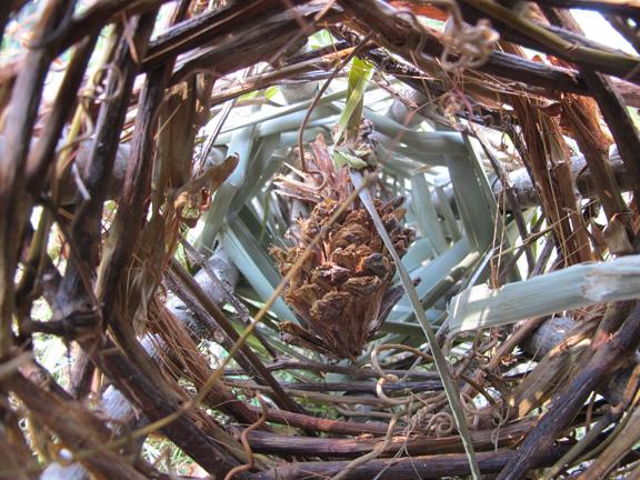 pinecone-hanging