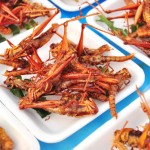The truth about eating insects: Can you eat bugs to survive?